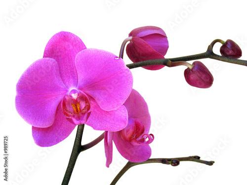 Fototapeta pąk - kwiat - Kwiat