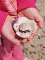 she hold sea shells