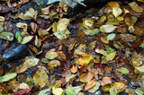 wet leaves of autumn poster