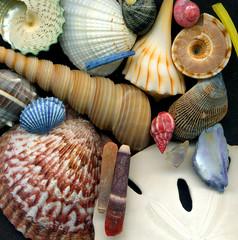 shellfish medley