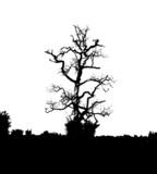 dead tree 95 poster