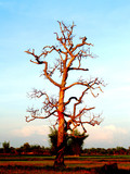 dead tree   96 poster