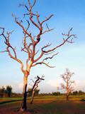 dead tree 97 poster