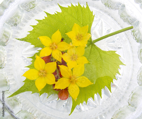 yellow flowers in water