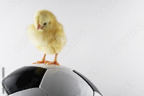 soccer - 1001341