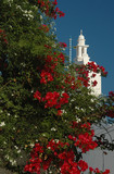 flowering tree and greek church poster