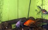 fish pals poster