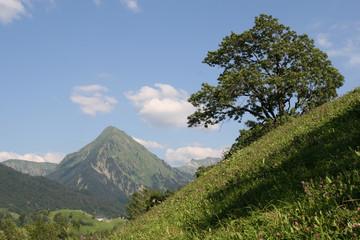 sommer im hochgebirge