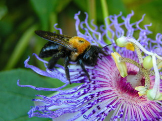 passion bee