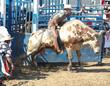 cowboy riding a bull - 1016702