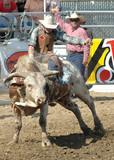 cowboy and bull
