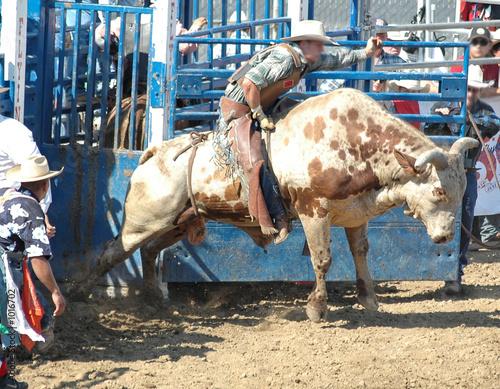 Leinwandbild Motiv cowboy riding a bull