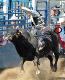 bull & cowboy rider off the ground