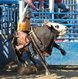 bull & cowboy rider poster