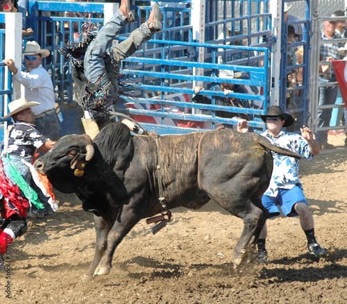 Papiers peints Taurin bull upending a rider