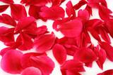 scattered petals poster