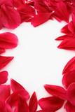 petal frame poster