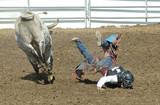 bull calf trowing a teenage rider poster