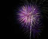 bright purple fireworks