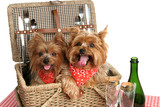 picnic basket of puppies poster