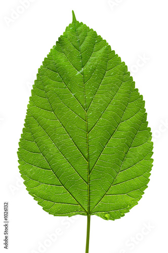 Spoed canvasdoek 2cm dik Textures big tree leaf texture