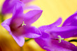 flower macro extreme