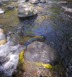 mossy, rocky, creekosity poster