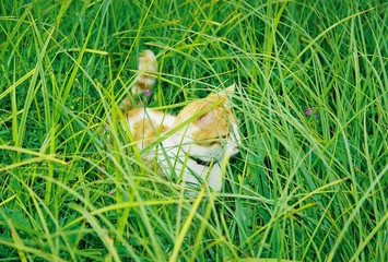 a cat in grass