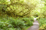 moss covered walkway poster