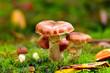 mushroom under a tree