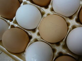 brown and white eggs in carton poster