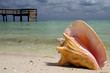 conch on beach - 1047757