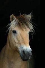 beautiful horse on black