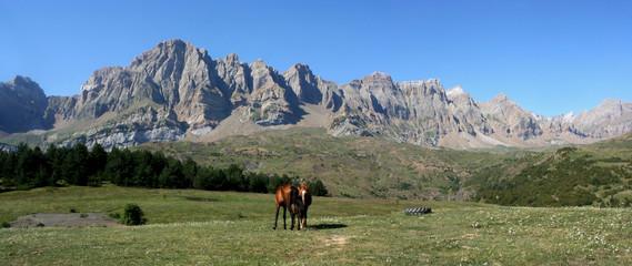 chevaux devant partacua (pn367x14)