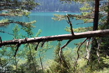 forest vegetation and lake