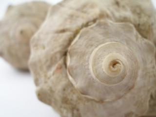 two sea shells