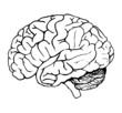 brain - 1080530
