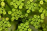 Fototapety plante de plage