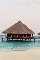 heron by hut at maldives