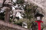 japanese lantern in spring poster