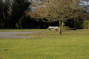 lonely autumnal bench