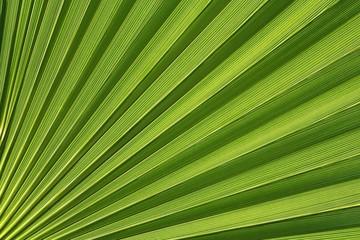 palmetto abstract