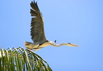 the bird's flight