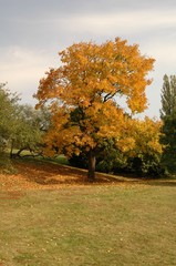park tree in autumn