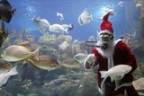 santa clause feeding fishes poster
