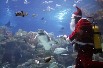 santa clause feeding shark