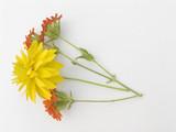 flower still-life poster