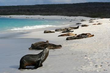 la plage des otaries