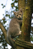 kitten on a tree poster