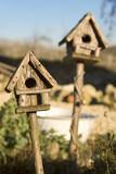 bird houses in sunshine poster